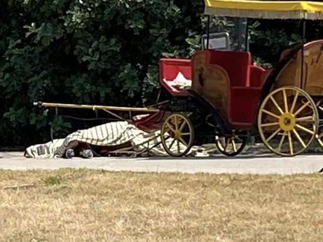 Un altro cavallo muore per far divertire un turista