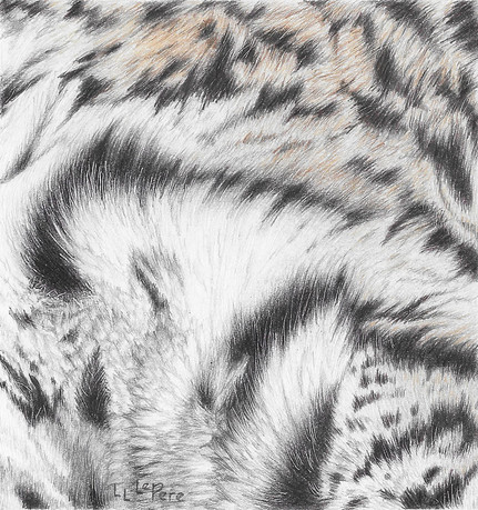 Ocelot Fur Study