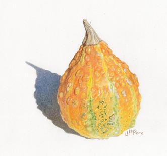 Autumn Gourd
