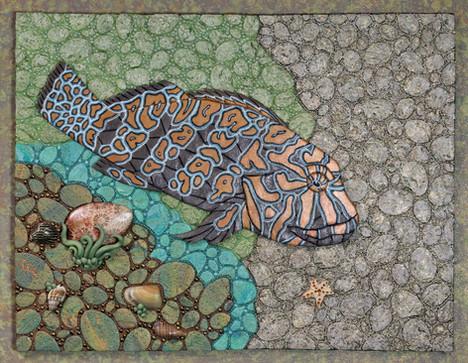 Giant Hawkfish: Sea of Cortez