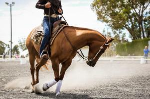 Equinox Trust Horse Expo 2020