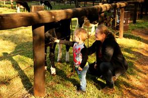 Xanrijk at Irene Farm