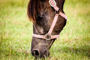 Houston SPCA Equine Adoption Centre, Waller TX