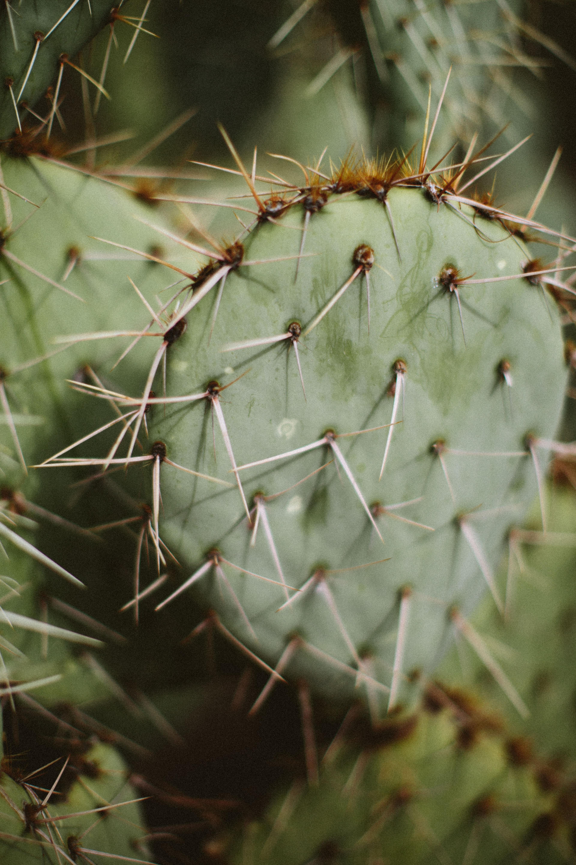 Arizona-2