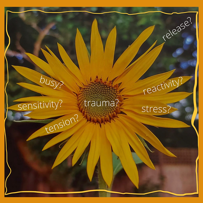 Integrating Trauma-Sensitive Practices - how do Feldenkrais, Physiotherapy and Trauma Release Exercises work together?