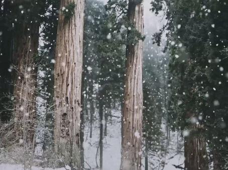 Invierno 2019 en Cerro Chapelco