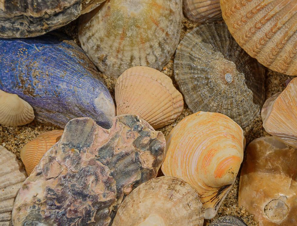 She Sells Seashell On The Seashore