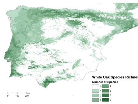 Diversidade de carvalhos no SW português