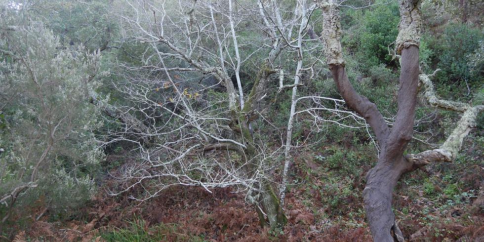 Visita aos castanheiros de Aljezur.