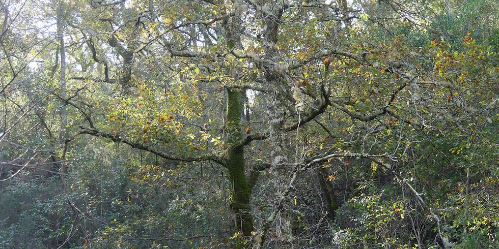Dia Nacional da Floresta autóctone