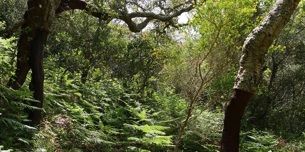 Silvicultura Próxima da Natureza