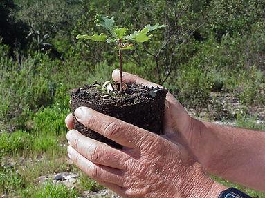 plant_carvalho.jpg