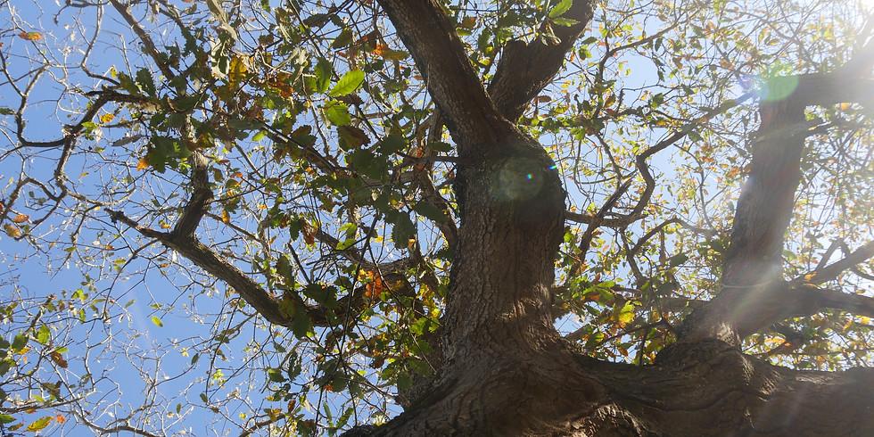 REWILDING em ambiente florestal