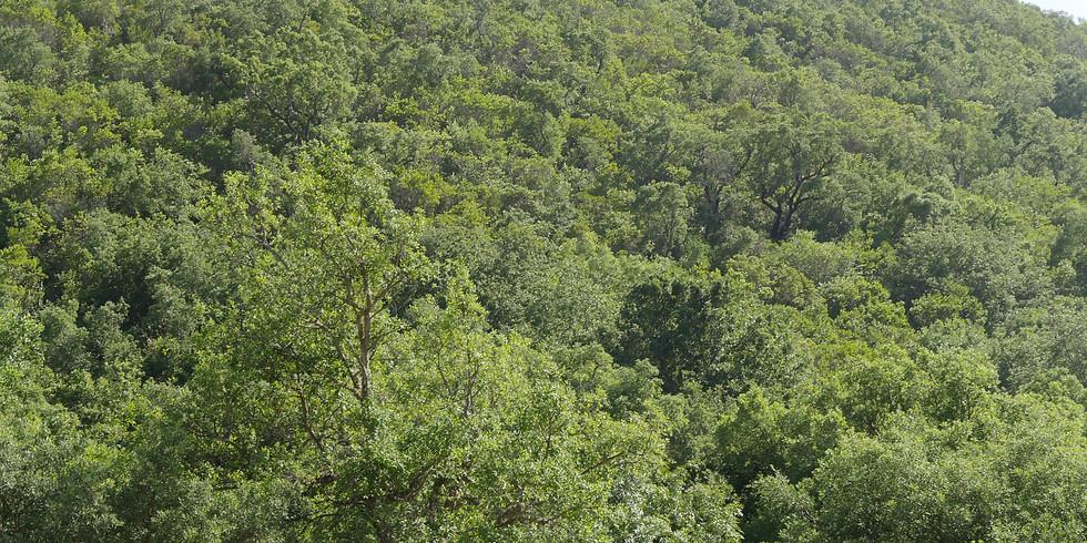 Dia do Ambiente: ação de combate de plantas invasoras