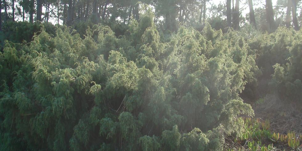 Adaptações das plantas – sistemas dunares