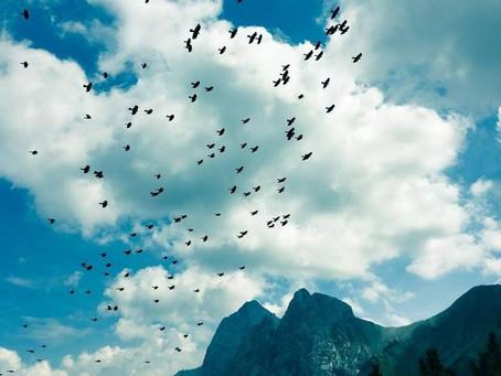 free / sentir el viento