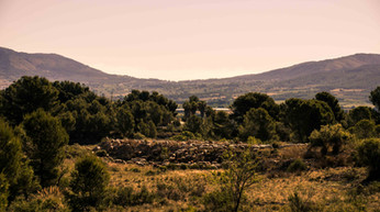 Landscape in Alicante sheeps