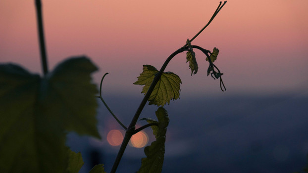 Sundown in Stuttgart vineyards