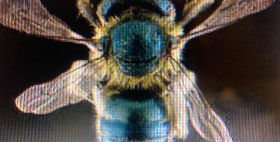 Mason Bee Class Sunday Nov 22 @12pm