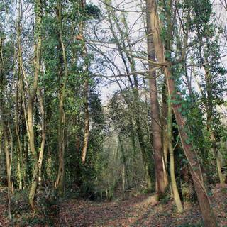 Chemins de forêt