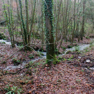 ruisseaux-parc-domaine-la-mazure.jpg