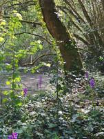 Etang bordé de jacinthes