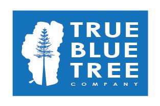 TrueBlueTree_sized.jpg