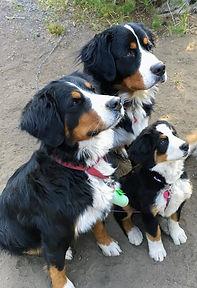 camping w 3 dogs.jpg