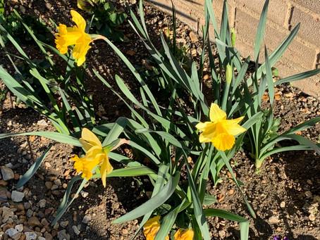 Spring? What Spring? Fun Poem
