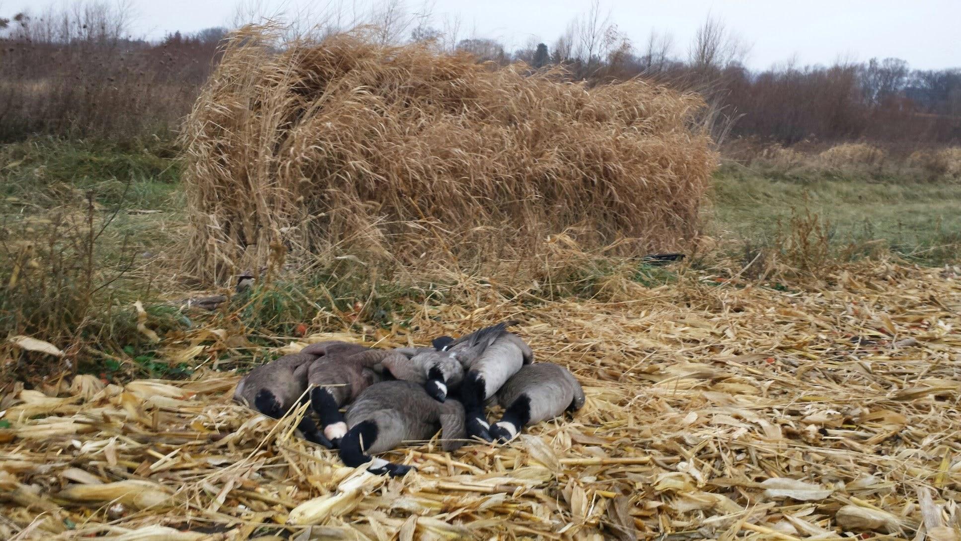 Illinois goose hunting club