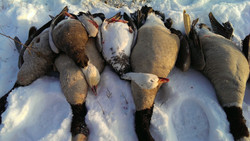 Illinois goose hunting club