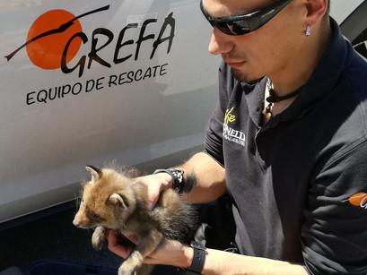 VISITA GUIADA A GREFA (Grupo de Rehabilitación de la Fauna Autóctona y su Hábitat)