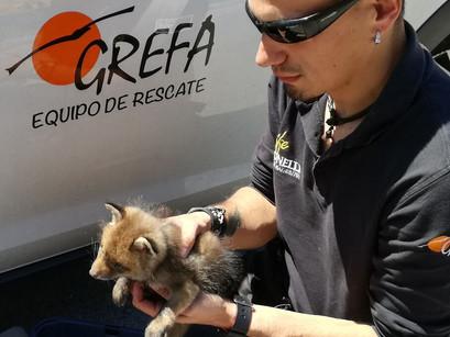 Visita guiada a GREFA: Equipo de Rescate