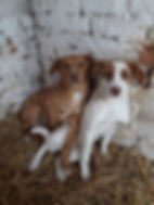 Dogs looking for a home