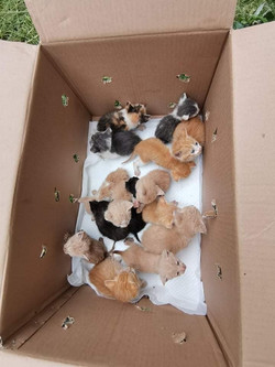 340 CATS & DOGS A MONTH IN ALEKSANDROVAC NEUTERED