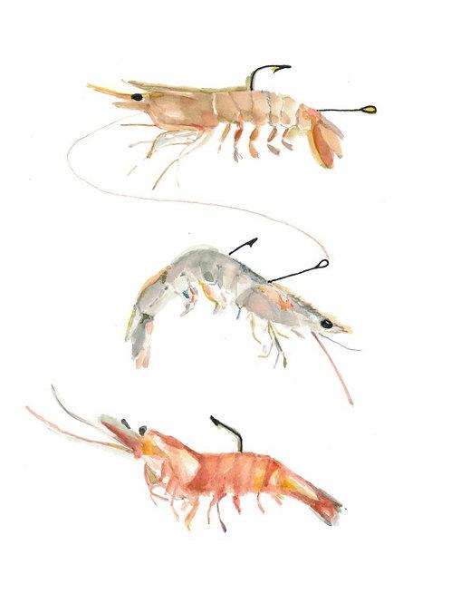 bait shrimp watercolor print