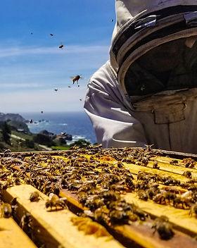 bees-4687176_1920.jpg