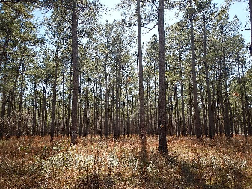santee_rcw_trees.jpg