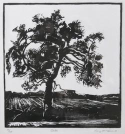 Oak - Woodcut - AP