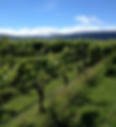 NZ-v-yard-300x225.jpg