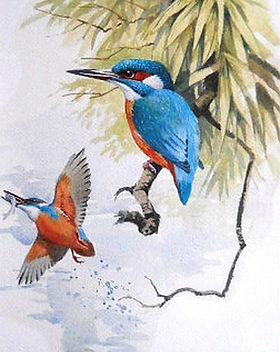 Kingfisher - Edition of 500.jpg