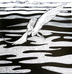 Artic Tern - Climate Refugee - Print  fr