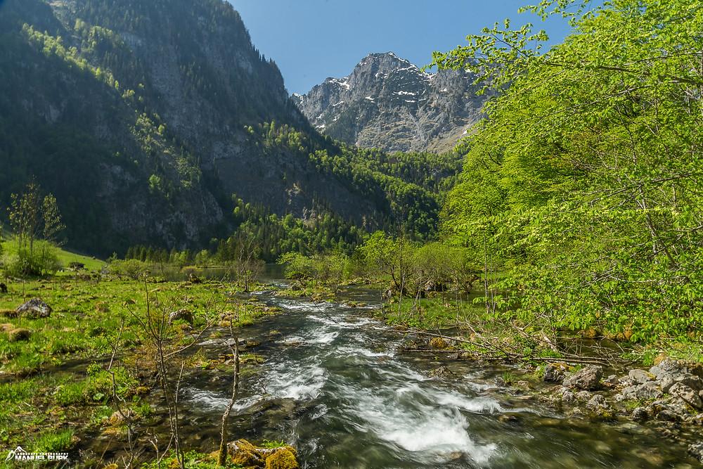 Wanderung durch den Auwald zwischen den beiden Seen