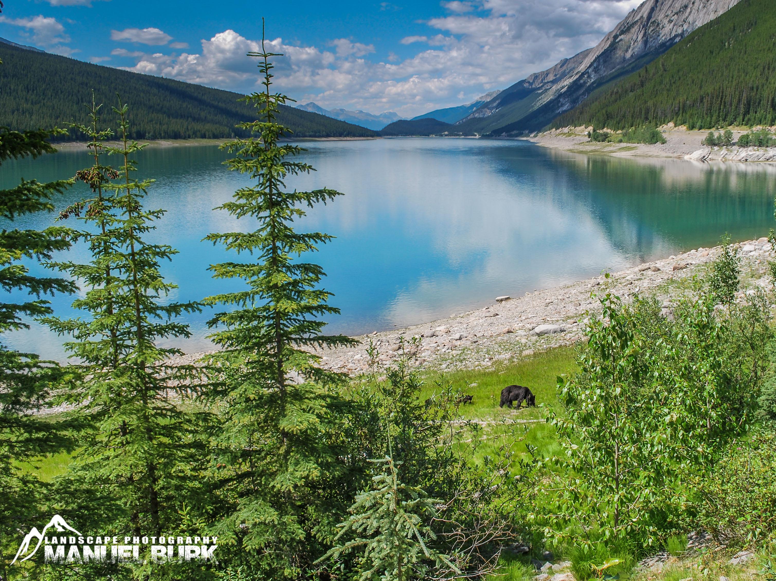 Schwarzbären am Medicine Lake