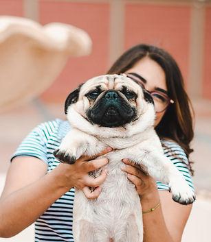Pug with wrinkles