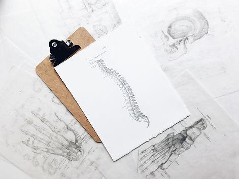 Spinal anatomy drawing
