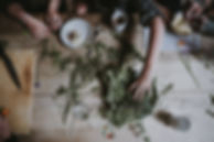 Herbal gathering leaves as medicine rosemary mint basil sage flowers botanica medicine