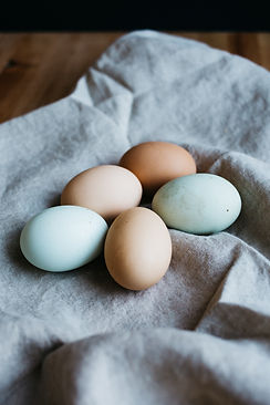 different colored eggs pastel easter chicken homegrown