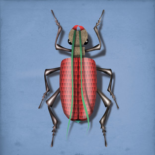 INSECT 01.jpg