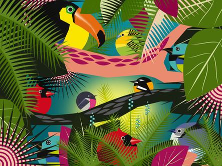 CIRCLE BIRDS / AMAZONIA